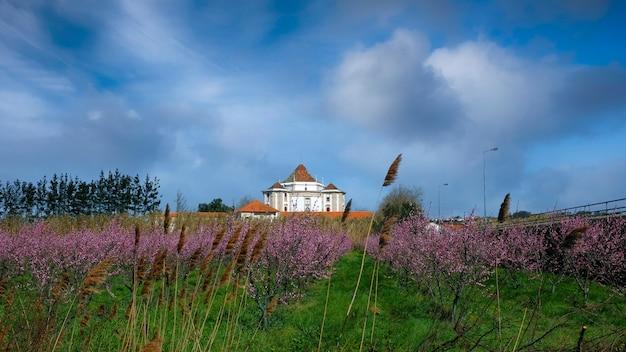 Sanktuarium pana jezusa wykonane z kamienia niedaleko obidos przy polu z kwitnącymi migdałami. wiosna w portugalii