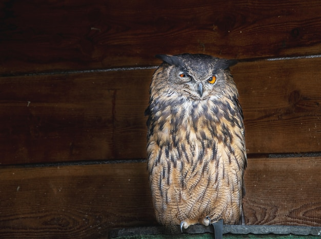 Sanktuarium ptaków w niemieckim mieście bawariasowa w sanktuarium ptaków w niemieckim mieście bawaria