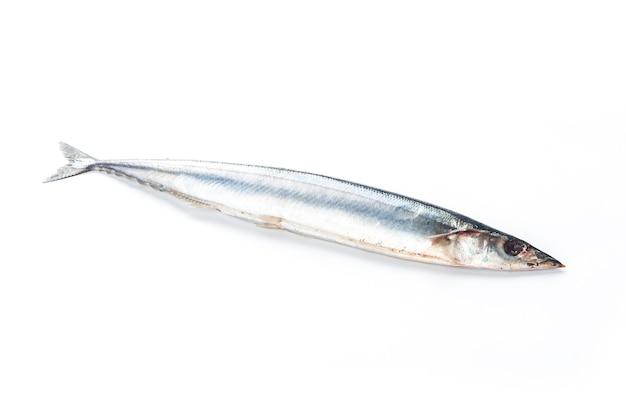 Saury ryb na białym tle