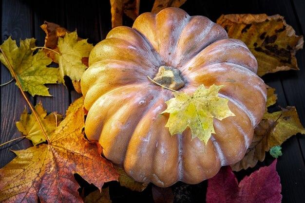 Scena jesienna. dynia i liście