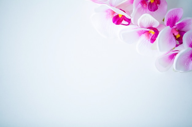 Scena spa i wellness, kwiat orchidei na drewniane pastelowe