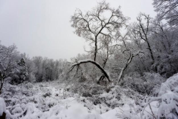 Scena zimowa
