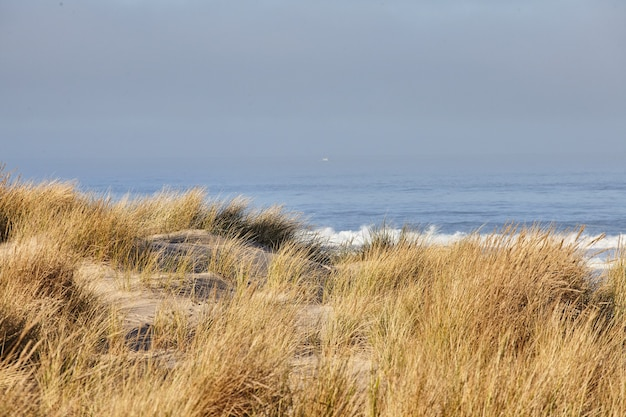 Sceneria beachgrass rano w cannon beach w stanie oregon