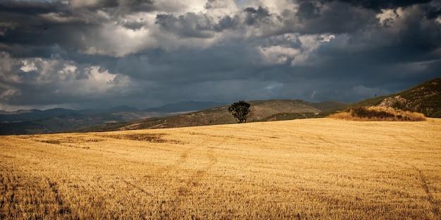 Sceneria pola otoczonego wzgórzami pod zachmurzonym niebem