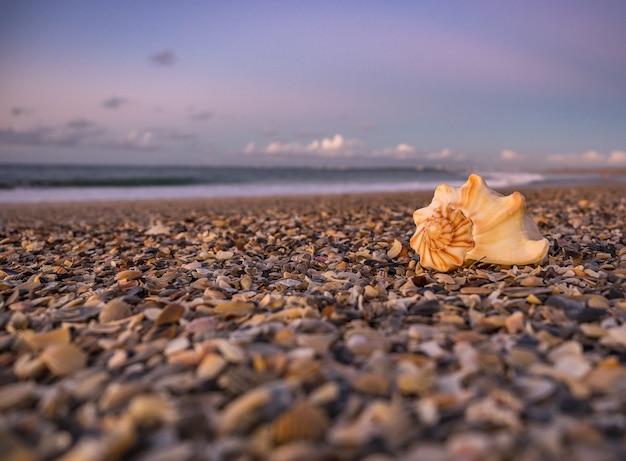 Sceneria zapierającego dech w piersiach zachodu słońca na plaży we wschodniej florydzie
