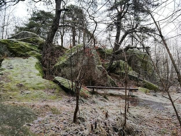 Sceneria zielonego lasu w larvik w norwegii