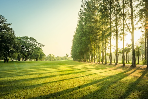 Sceneria zielony golf i łąka z sunbeam w ranku