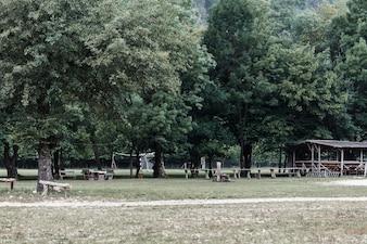 Scenics widok drzewa w parku