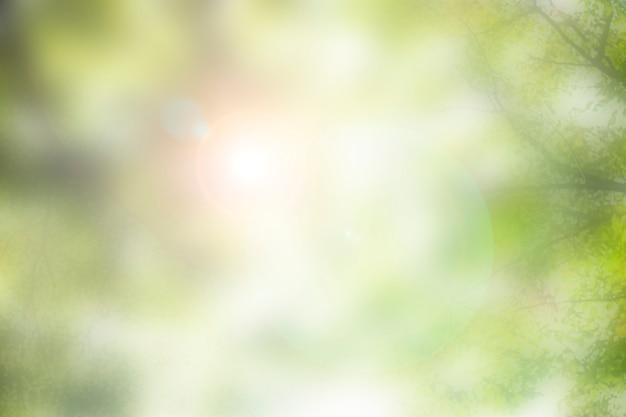 Sceniczna flara przeciwsłoneczna świecąca przez drzewa fotografia przyrodnicza