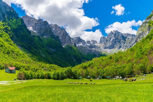 Sceniczna zielona łąka na wysokich szczytowych skałach.