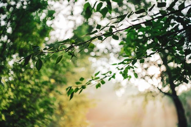 Sceniczny pogodny naturalny zielony tło. słońce na pięknych liściach. niesamowity poranny krajobraz natury z promieniami słońca. bogata zieleń w słoneczny dzień z miejsca na kopię. sceneria roślinności w świetle słonecznym.