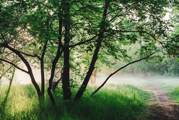 Sceniczny pogodny zielony krajobraz wschód słońca. chodnik pod drzewami w parku wczesnym rankiem we mgle. kolorowa sceneria z drogą przemian wśród zielonej trawy i luksusowych drzew na zmierzchu. żywe naturalne zielone tło