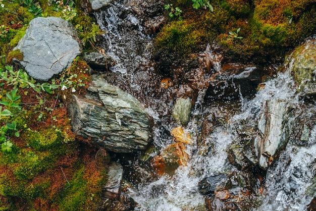 Sceniczny z czystym strumieniem wody źródlanej wśród gęstego mchu i bujnej roślinności. górski potok na omszałym zboczu ze świeżą zielenią i wieloma małymi kwiatami. kolorowe tło bogatej flory alpejskiej.