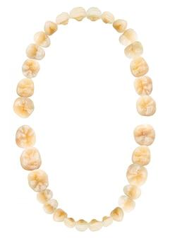Schemat zęba (