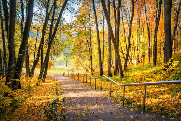 Schody na dół w jesiennym parku carycyno w moskwie