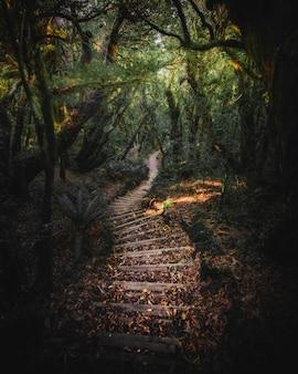 Schody na górze taranaki, park narodowy egmont, nowa zelandia