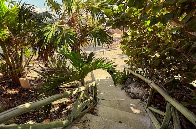 Schody otoczone tropikalną przyrodą, prowadzące na plażę puerto aventuras na riwierze majów w meksyku
