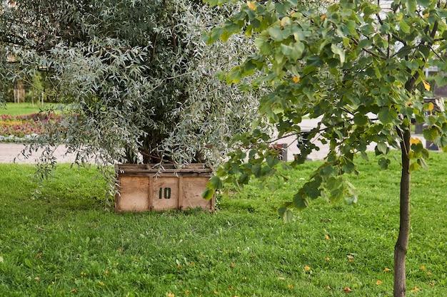 Schowek ze sklejki na narzędzia ogrodnicze pod drzewem w parku miejskim