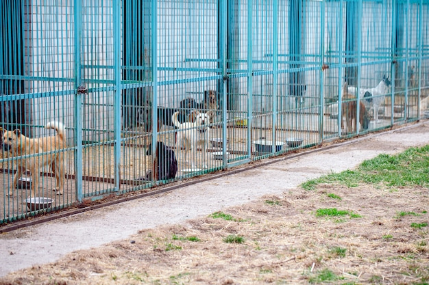 Schronienie dla bezpańskich psów.