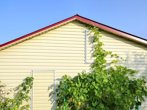 Ściana domu z winoroślą i błękitnym niebem nad dachem w słoneczny letni dzień