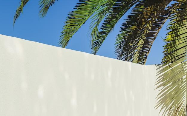 Ściana ogrodu z letnim tłem palmowym palm