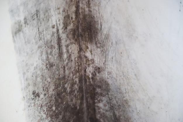 Ściana poczerniała od wilgoci i grzybów. selektywne skupienie.