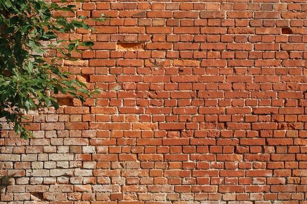 Ściana starego domu, czerwona cegła, gałąź drzewa z liśćmi na tle ściany. pomysł wykończenia loftu, tło w pracowni lub kawiarni, tło naturalne