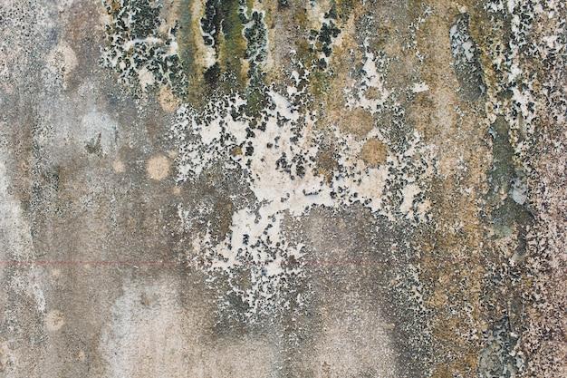 Ściana z zieloną pleśnią i brudem na powierzchni.