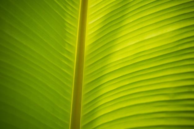 Ściana zielonych liści
