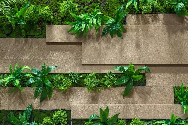 Ściany i rośliny ozdobne.