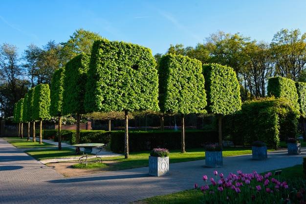 Ścięte drzewa w ogrodzie kwiatowym keukenhof holandia