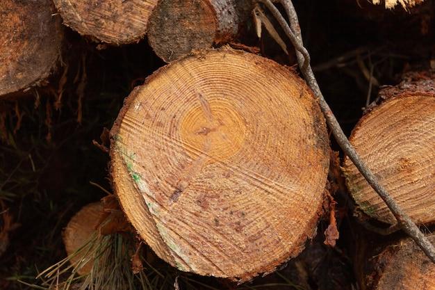Ścięty pień przekrój drzewa drewno opałowe drewno ostrość selektywna