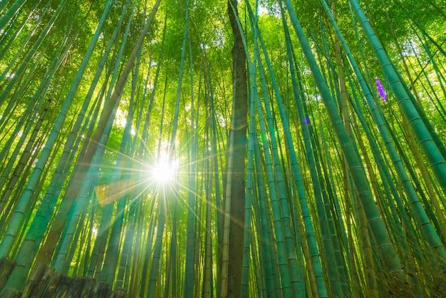 Ścieżka bambusowy las przy arashiyama w kyoto.