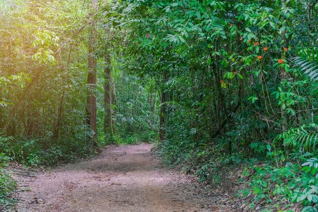 Ścieżka chodnikowa i drzewa las w okresie letnim