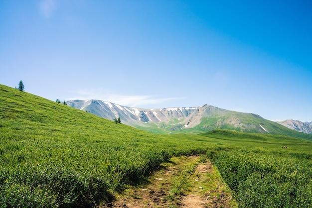 Ścieżka do gigantycznych gór ze śniegiem przez zieloną dolinę pod jasnym błękitnym niebem
