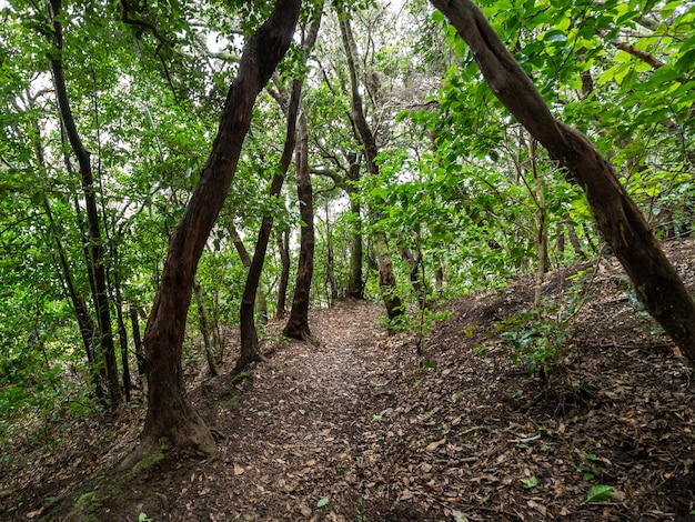 Ścieżka do lasu z liśćmi