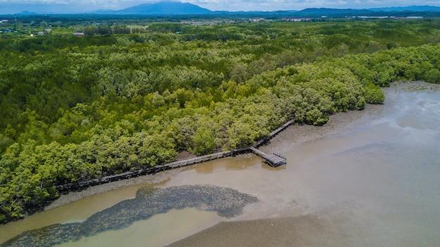 Ścieżka do nauki przyrody, wykonana z drewna, i spacer przez las tagalny ceriops