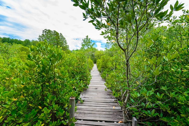 Ścieżka do nauki przyrody, wykonana z drewna