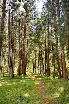 Ścieżka leśna w gminie toblach
