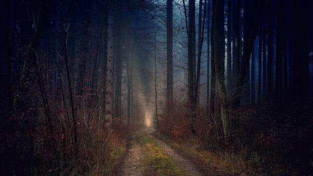 Ścieżka między nagimi drzewami w nocy