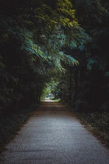 Ścieżka otoczona drzewami i krzewami w lesie pod słońcem