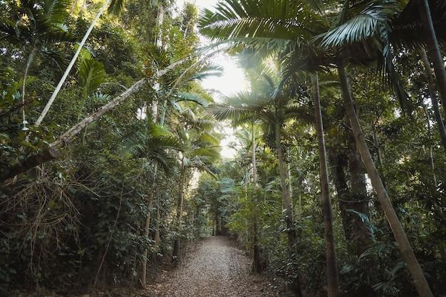 Ścieżka otoczona drzewami i krzewami w świetle słonecznym w ciągu dnia
