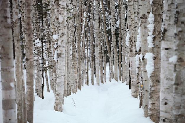 Ścieżka otoczona drzewami pokrytymi śniegiem na hokkaido w japonii