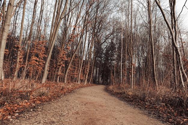 Ścieżka otoczona liśćmi i drzewami w lesie pod słońcem