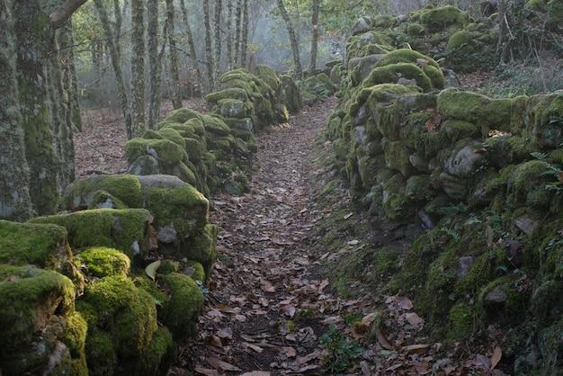 Ścieżka pełna liści ze skałami po obu stronach wypełnionych mchem w jesiennej atmosferze z odrobiną mgły