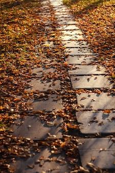 Ścieżka pokryta jest żółtymi liśćmi.