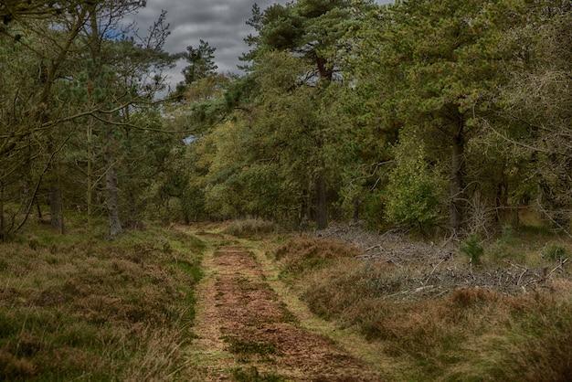 Ścieżka pośrodku jesiennego lasu otoczonego wysokimi drzewami pod ponurym niebem