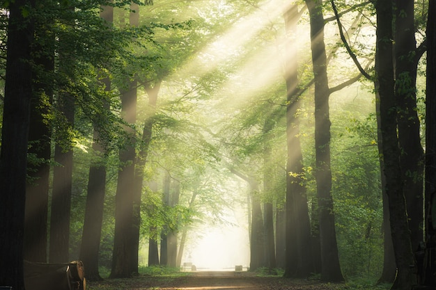 Ścieżka pośrodku zielonych drzew liściastych ze słońcem świecącym przez gałęzie