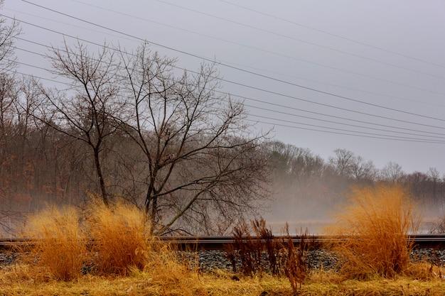 Ścieżka przez jesień las na deszczowym dniu i mgły mgle