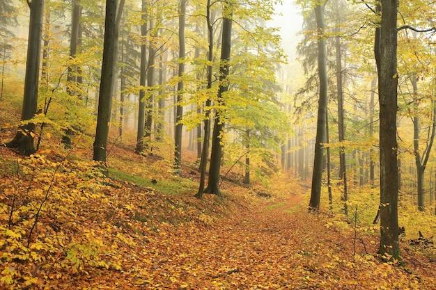 Ścieżka przez jesienny las przy mglistej pogodzie w październiku